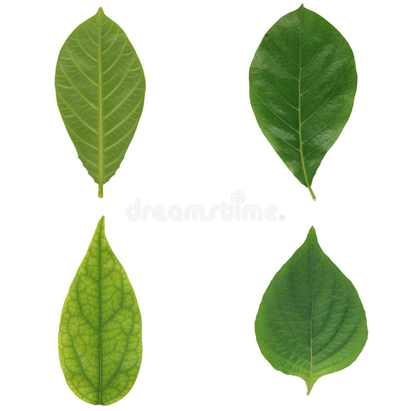 grön isolerad leaf fyra arkivfoto