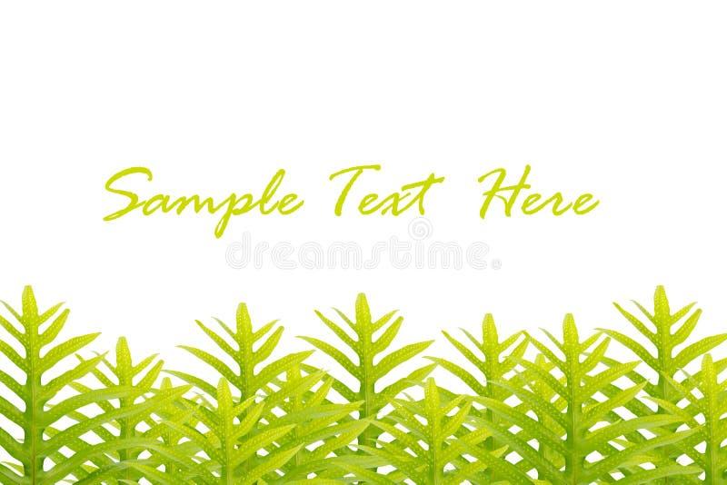 grön isolerad leavestext för bakgrund arkivfoto