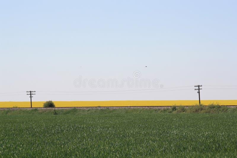 grön järnväg för fält arkivfoton