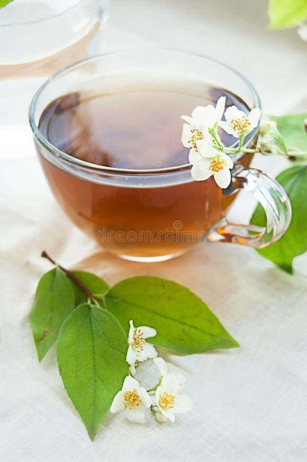 grön jasmintea för kopp arkivfoto