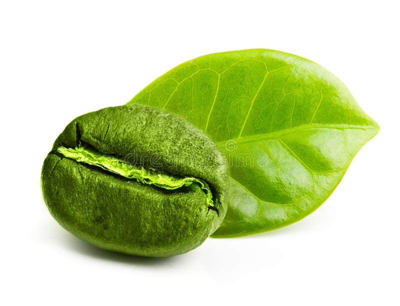 Grön kaffeböna med bladet arkivfoto