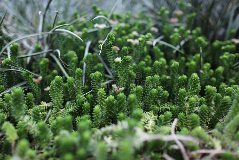 Grön kaktus överallt royaltyfria bilder