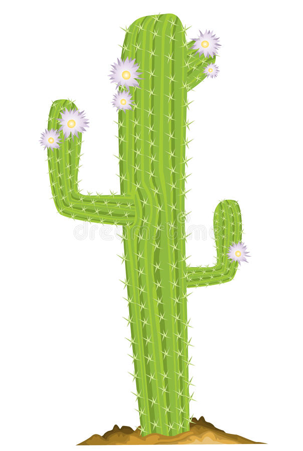 Grön kaktus royaltyfri illustrationer