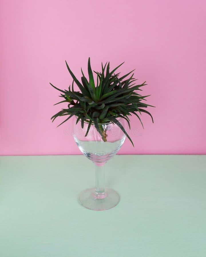 Grön kaktus i ett exponeringsglas på en färgrik bakgrund arkivbild