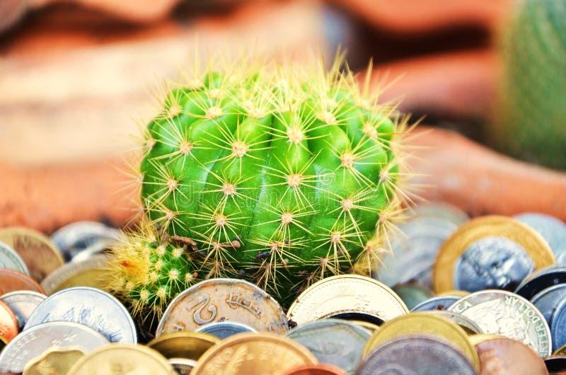 Grön kaktus och mynt i jord arkivbild