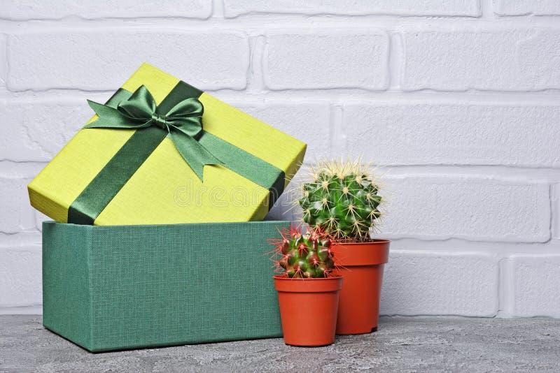Grön klassisk gåvaask med satängpilbågen och små kakturs i röda blomkrukor fotografering för bildbyråer