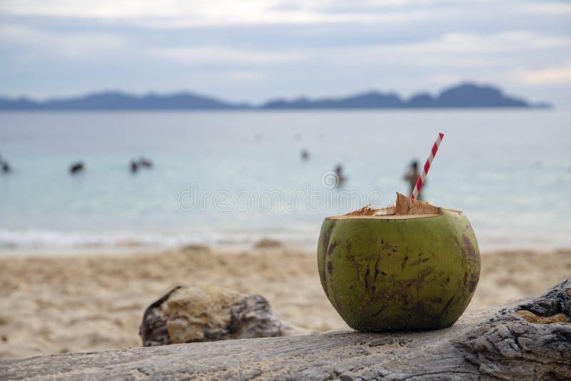 Grön kokosnöt med sugröret på havsstrandsand Kokosnötdrink på den tropiska kusten arkivfoton