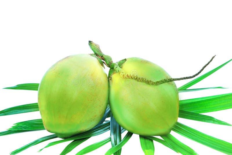 Grön kokosnötgrupp på palmbladisolatvit arkivfoto