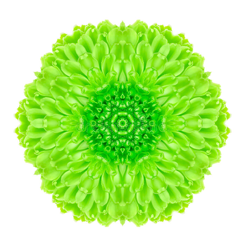 Grön koncentrisk blomma som isoleras på vit. Mandala Design arkivfoto
