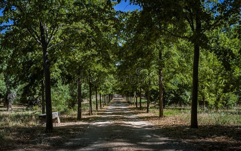 Grön korridor, vårväg arkivbild