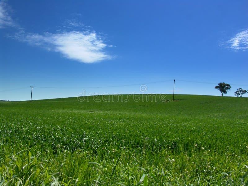Download Grön kull fotografering för bildbyråer. Bild av natur, gräs - 281747