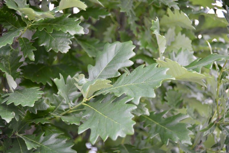 grön lövrik växt royaltyfri bild
