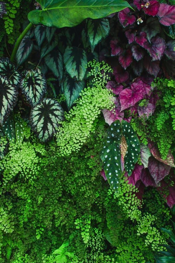 Grön lövverk med olika sidor arkivfoton