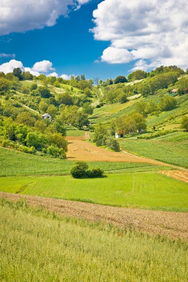 Grön landskapkulle med vingårdar och stugor arkivfoton