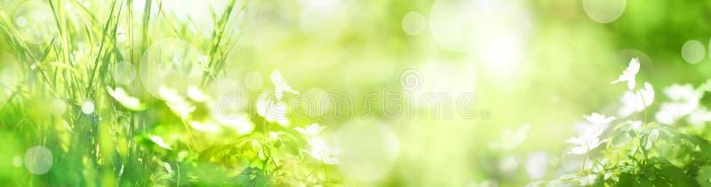 Grön landskappanorama med vårblommor arkivfoto