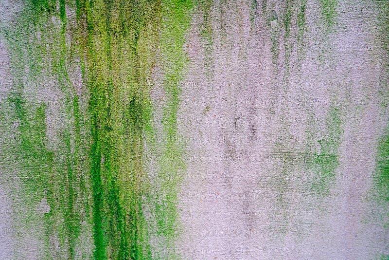 Grön lav på det gamla gråa cementgolvet arkivbilder