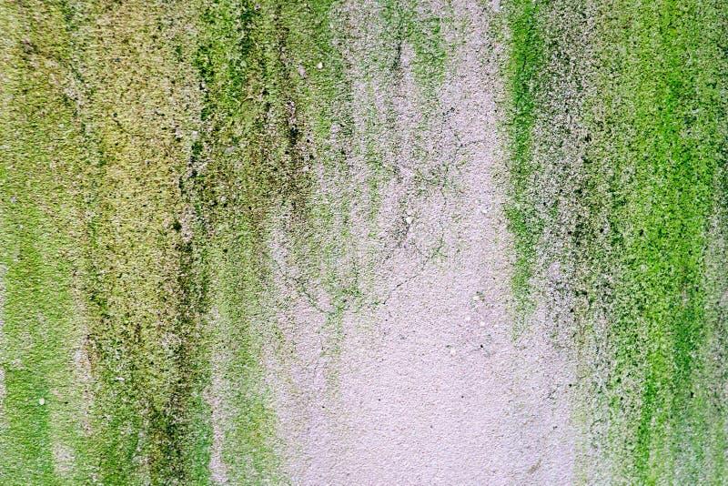 Grön lav på det gamla gråa cementgolvet arkivbild