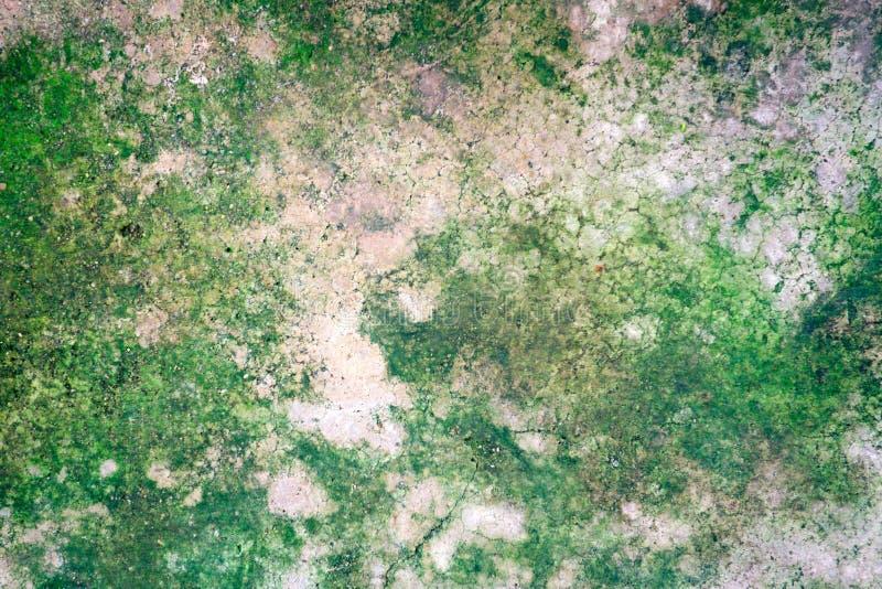 Grön lav på det gamla gråa cementgolvet royaltyfri fotografi