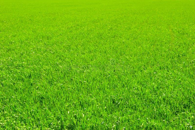 grön lawn royaltyfri foto