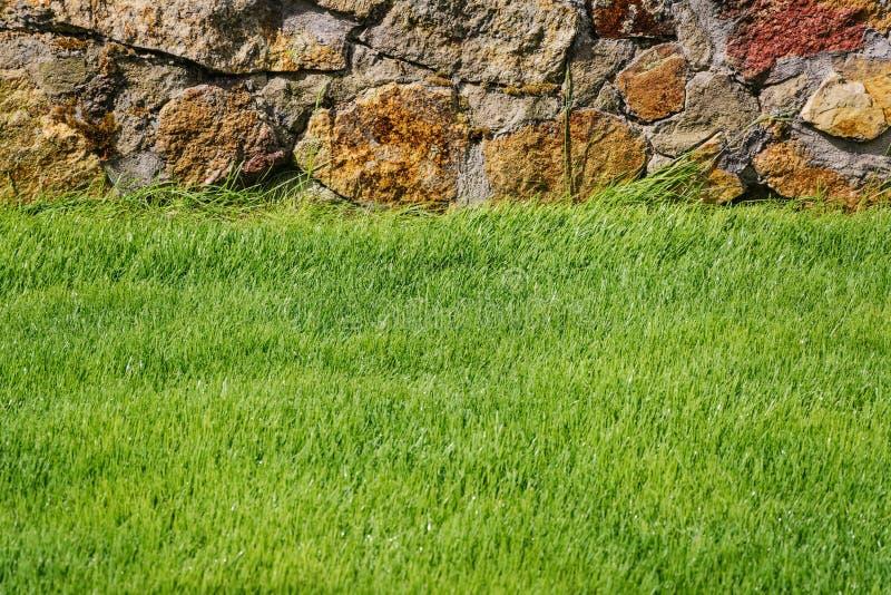 grön lawn arkivbild
