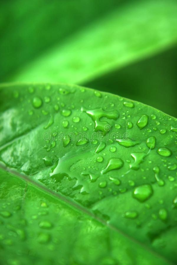Grön leaf6 royaltyfria bilder