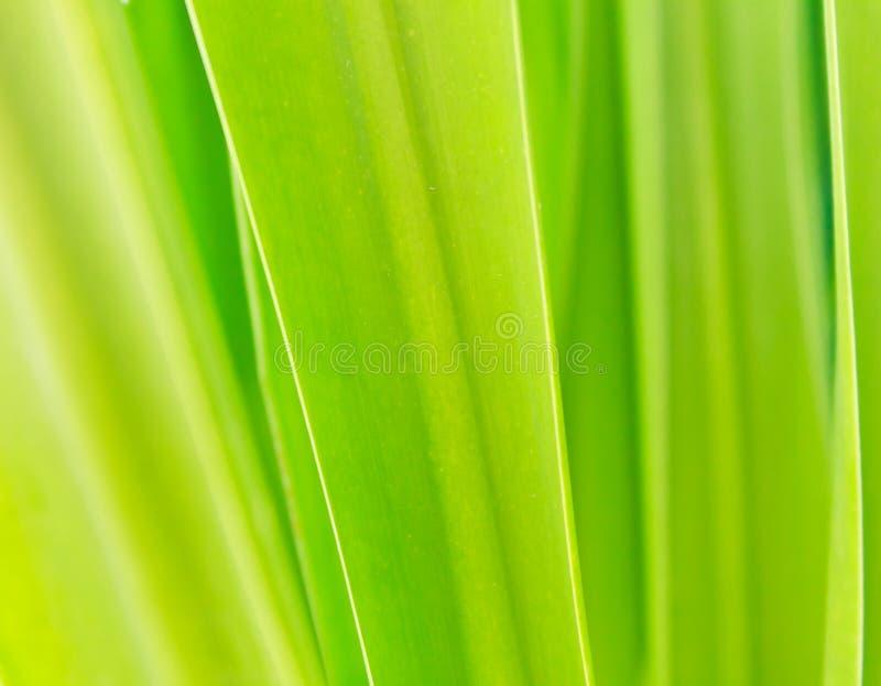 grön leaf för bakgrund royaltyfria bilder
