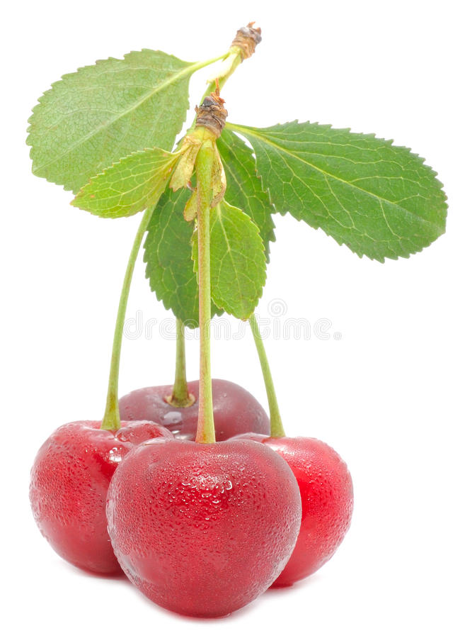 grön leaf för Cherry fotografering för bildbyråer