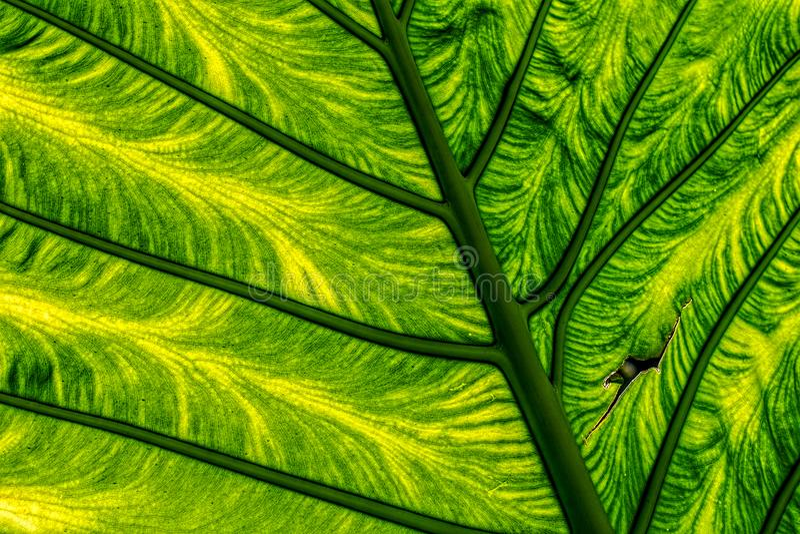 grön leaf för closeup royaltyfri fotografi