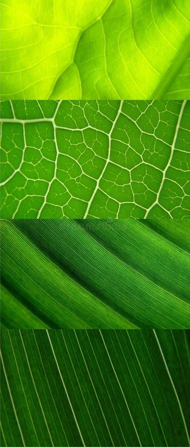 grön leaf för collage arkivfoto