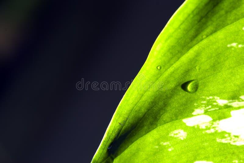 grön leaf för detalj royaltyfri fotografi