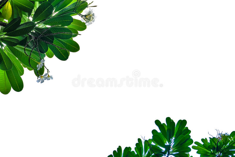 grön leaf för ram royaltyfri foto