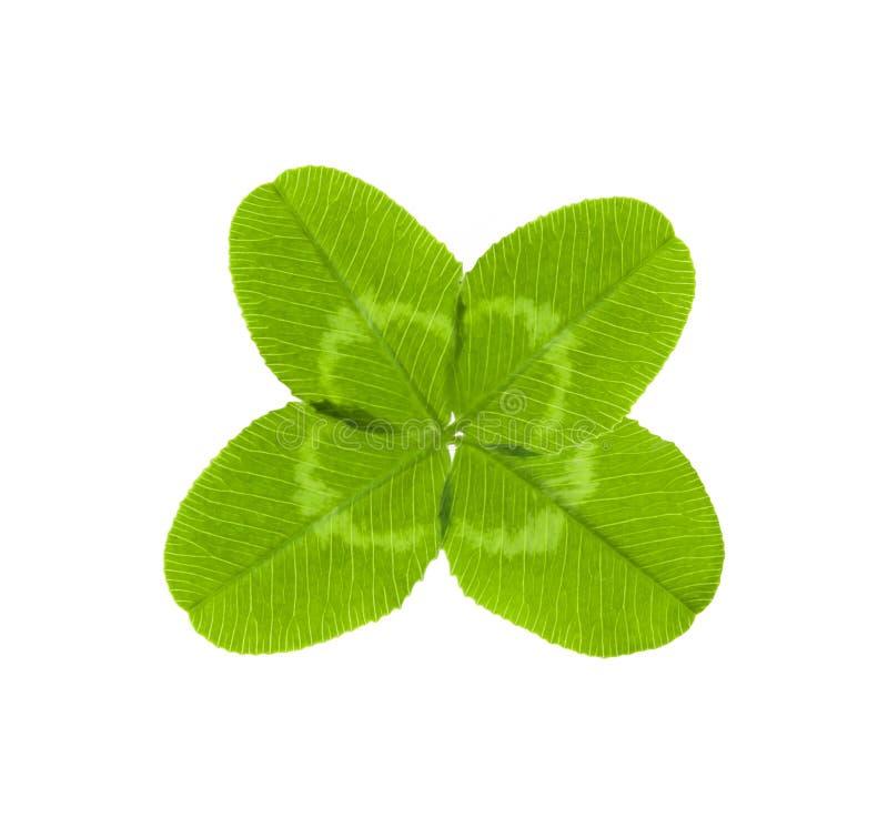 grön leaf för växt av släkten Trifolium fyra arkivbilder