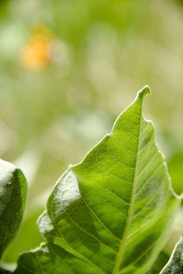 Grön leaf i solljus arkivbilder