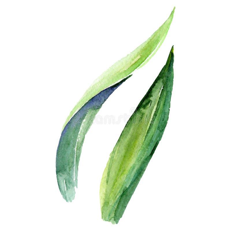grön leaf Lös isolerad vårbladvildblomma Uppsättning för vattenfärgbakgrundsillustration Akvarellteckningsaquarelle stock illustrationer