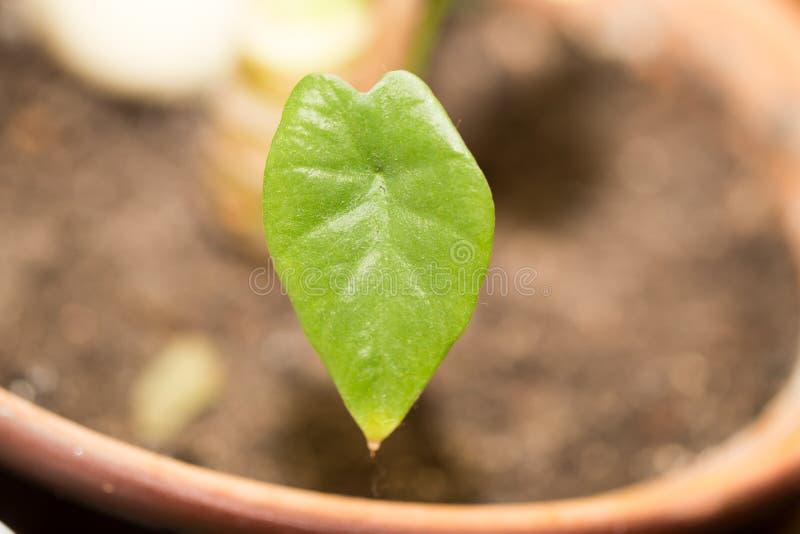 grön leaf Makro fotografering för bildbyråer