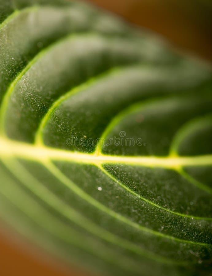 grön leaf Makro royaltyfri fotografi