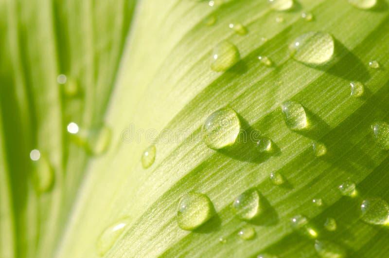 Grön leafbakgrund royaltyfri fotografi