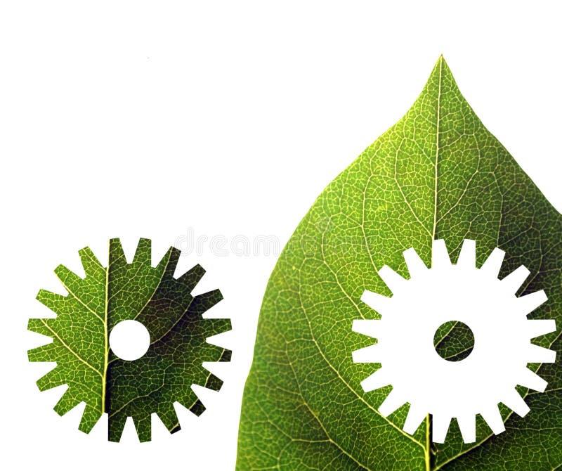 grön leafform arkivbild