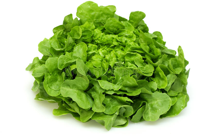 grön leafgrönsallatoak royaltyfria foton