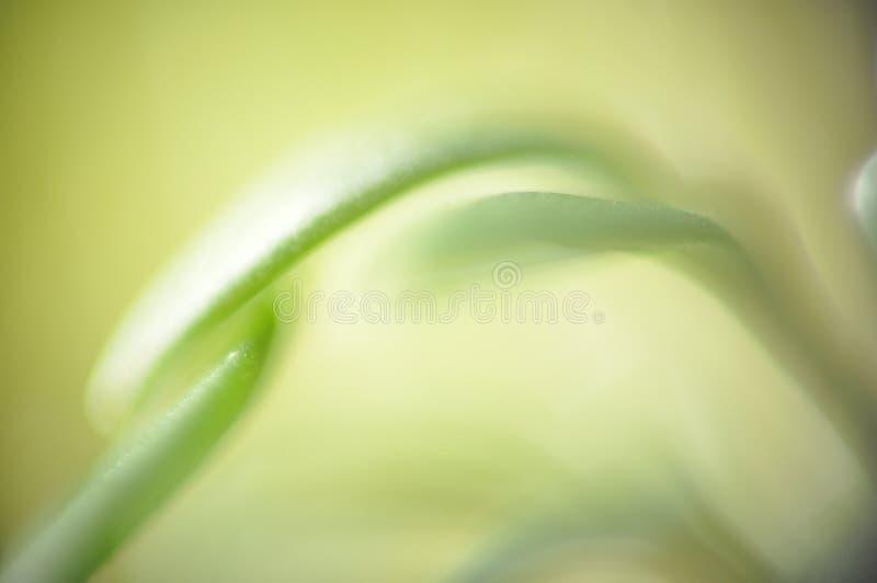 grön leafmakro royaltyfria foton