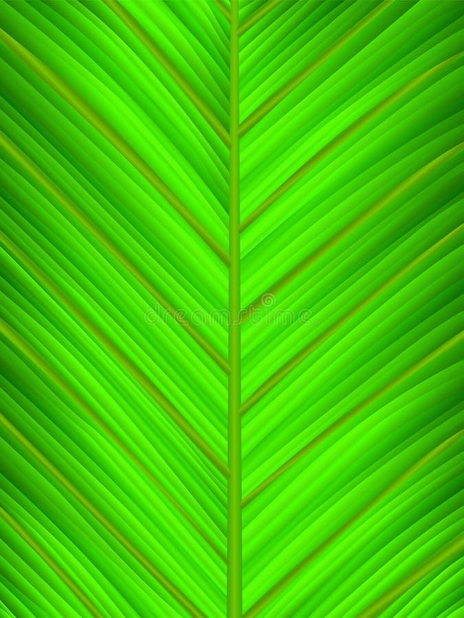 grön leafmakro royaltyfri illustrationer