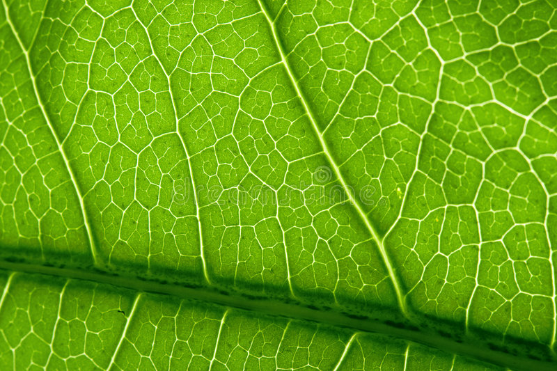 grön leafmakro för closeup royaltyfri foto