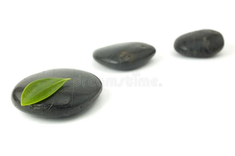 grön leafpebblesrad fotografering för bildbyråer