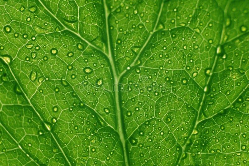 grön leafstruktur royaltyfria foton