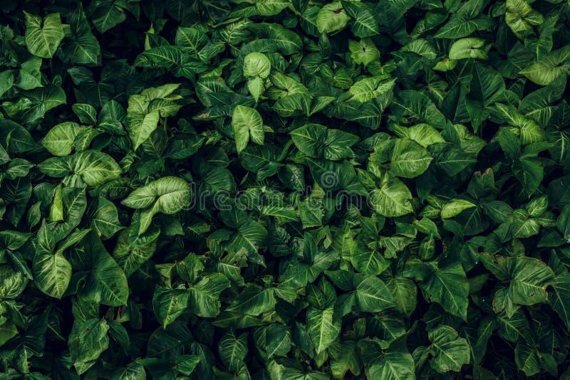 grön leaftextur Bladtexturbakgrund arkivbild