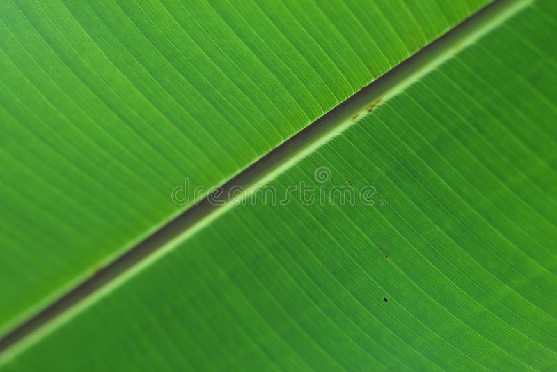 Download Grön leafyttersida arkivfoto. Bild av linje, makro, växt - 15288714