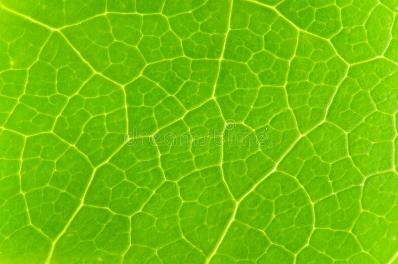 grön leave arkivbilder