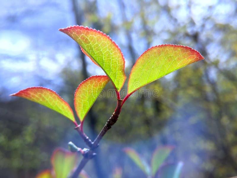 grön leavesfjäder royaltyfri fotografi