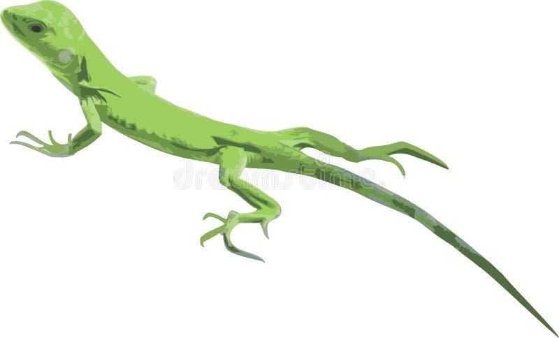 grön leguanillustrationvektor stock illustrationer