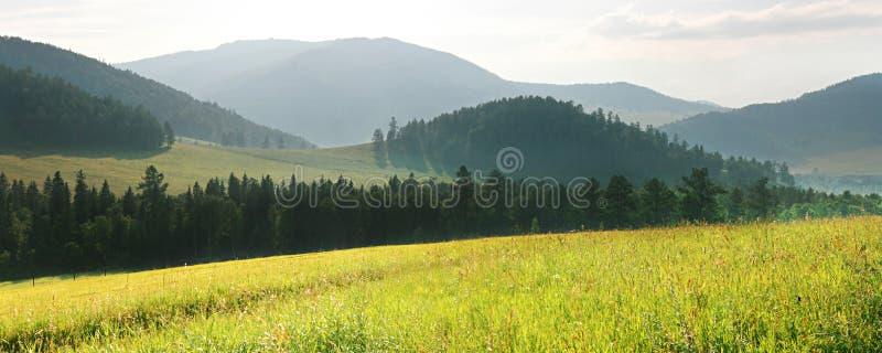 grön liggande för fält royaltyfria bilder